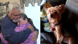 Woman Hospitalized With Broken Heart After Her Beloved Dog Dies