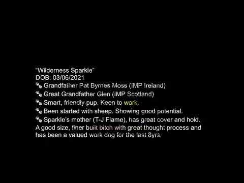 Wilderness Sparkle