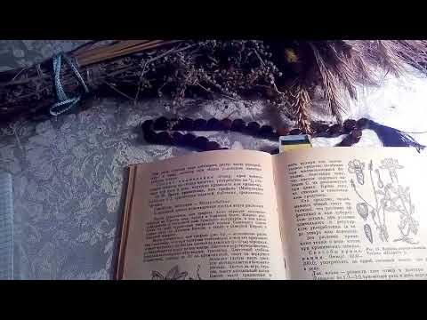 Вахта трехлистная (бобовник, трилистник водяной), описание и лечебное применение.