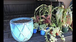 Fall Planters... Inspiration, Tips, & Advice
