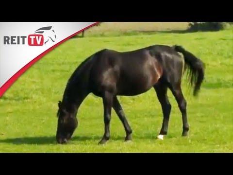 Pferdegesundheit   Omas Hausmittel können helfen