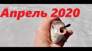 Сезон рыбалка в челябинской области 2020