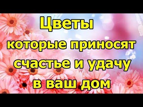 Цветы, которые приносят счастье в ваш дом.