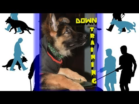 How To Train Your Dog To Down In Hindi : Dog Training In Hindi