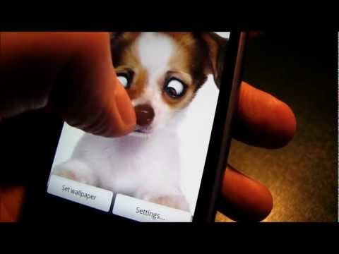 Video of Eye-Puppy Live Wallpaper