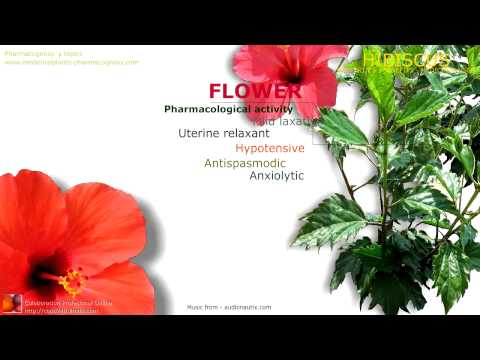 Video Hibiscus benefits. Health benefits attributed to the Hibiscus flowers.