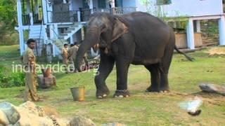 Elephant safari preparation
