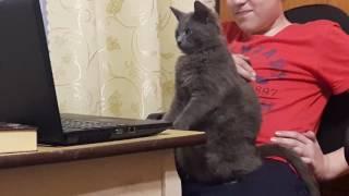Смотреть онлайн Кот смотрит видео про котика