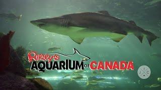 Ripley's Aquarium in Toronto - J&C Toronto