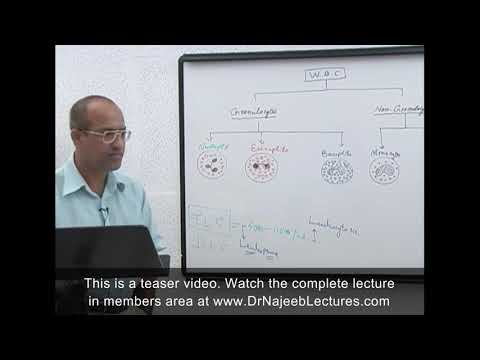 Leukocytes – White Blood Cells – Immune System