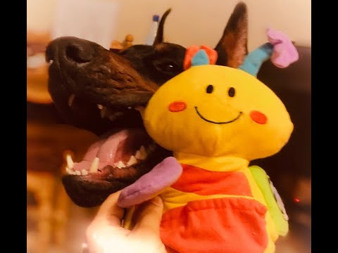 История игрушек 5 ( Собачий вариант) Toy story 5 (Dog version)