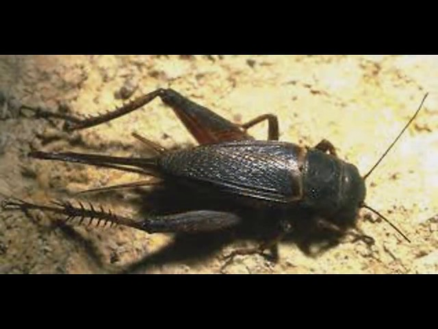 آلاف الصراصير تهاجم  بمكة، والجراد يغزو الرياض