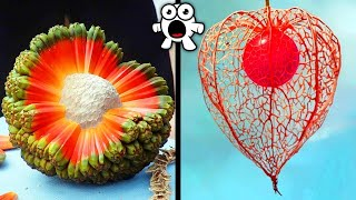 CRAZY Fruits You've Never Heard Of!
