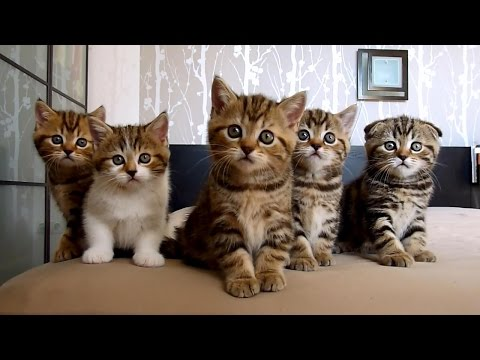 Funny Cats ECards Rocky and siblings Funny Cats and Cute Kittens..
