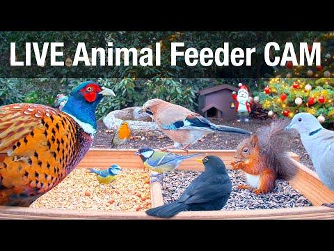 LIVE 4K Wild Animal & Bird Feeder Cam - Recke, Germany - ASMR, Bird Watching, 24/7