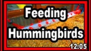 Feeding Hummingbirds - Wisconsin Garden Video Blog 677