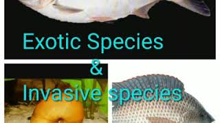 EXOTIC SPECIES & INVASIVE SPECIES : THE INTRODUCED SPECIES