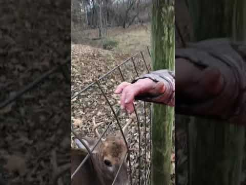 Hunting becomes a rescue mission