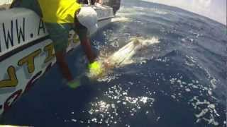 preview picture of video 'AdventureAntigua.com Fishing Tournament 2011.mov'
