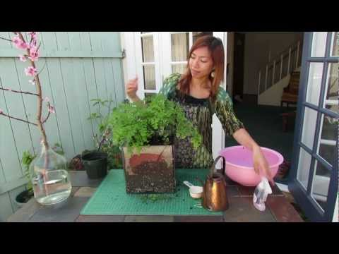 Video How to prevent root rot in potted plants