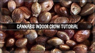 [TUT] Was benötige ich zum Anbauen von Cannabis ?