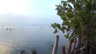 "SJCAM INDONESIA : ""SENJA DI PULAU LEMUKUTAN"" (MYRMICA) part 1"