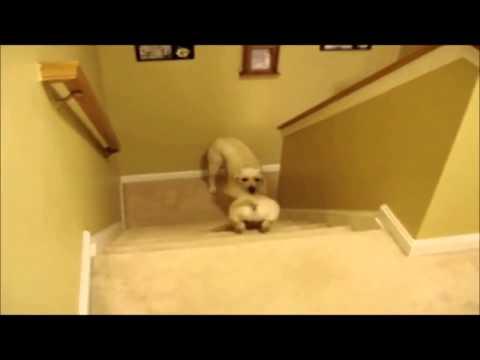 Perro y gato enseñando a sus crías a bajar escaleras