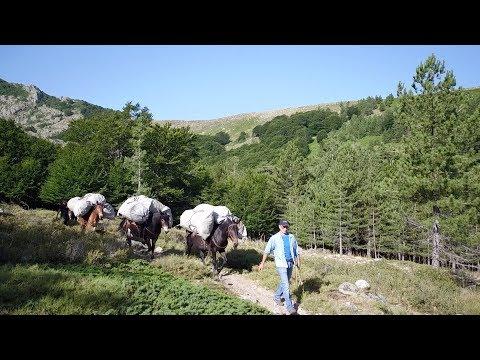 VIDÉO. Le GR20 évacue ses déchets à dos de mulets