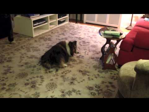 Video Old Dog Vestibular Disease