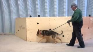 Drug Detection Dogs Training