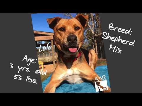 Lola, an adoptable Shepherd Mix in Magnolia, TX_image-1