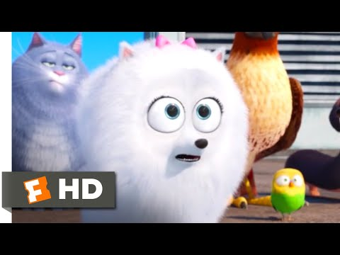 The Secret Life of Pets - Taking A Shortcut Scene | Fandango Family