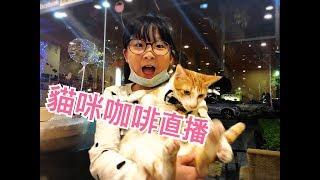 貓咪咖啡吃晚餐,今天影片稍晚會上傳