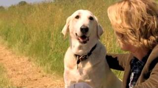 Marley & Ich Film Trailer