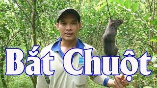 Bắt Chuột Mùa Nước Nổi   Catch The Mouse