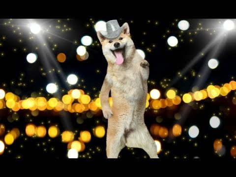 Funny Dogs Dancing Compilation 2017 - Funny Dog Videos
