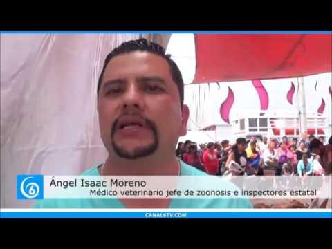Realizan jornada de esterilización masiva canina y felina en el municipio de Ixtapaluca
