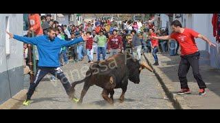touro na rua são manços 2017