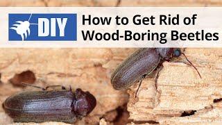 How to Get Rid of Wood Boring Beetles | DoMyOwn.com