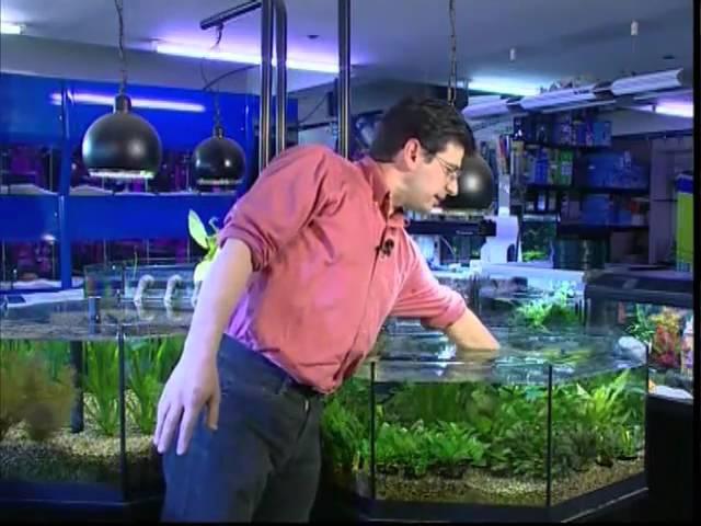 Video acquari 3/4 ALLESTIMENTO - Come allestire e mantenere l'acquario d'acqua dolce e marina
