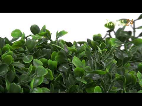 Floristik24 Buchsbaumgirlande