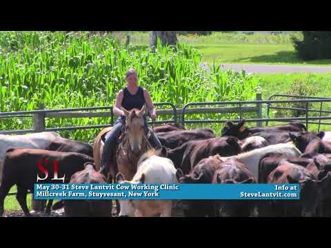 Steve Lantvit May 30-31 Cow Working Clinic - Stuyvesant, New York