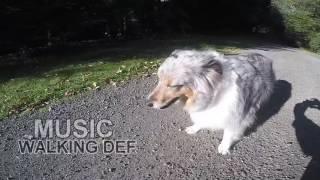 Dog Walking the Northwest