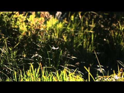 ± Free Streaming The Fascinating World of Insects