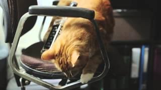 Смотреть онлайн Необычная жизнь обычной кошки