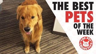 Best Pets of the Week Video Compilation   August 2017