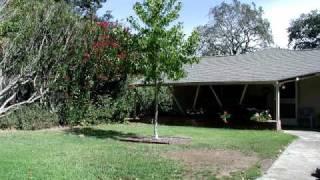 Growing Tree. 5 Year Timelapse From My Backyard.