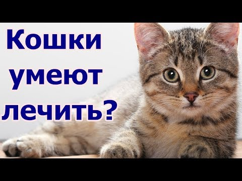 Кошки умеют лечить?