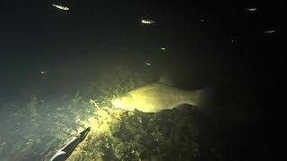 Ночная подводная охота на лесном озере. Подводная рыбалка.