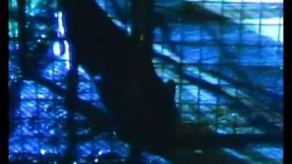 Gary Numan She's Got Claws Official Video